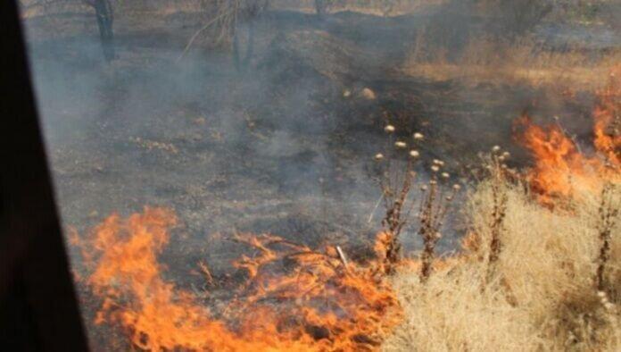 2 هزار متر از عرصه های جنگلی چیتگر تهران در آتش سوخت