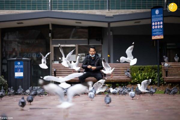 (تصاویر) سیدنی در قرنطینه
